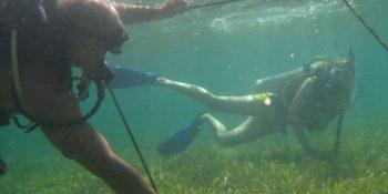 Mexico Marine Conservation zeegras meten