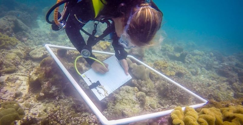 Coral reef Research Fiji koraalonderzoek 2