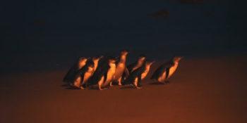 Kickstart Melbourne Phillip Island Penguin Parade
