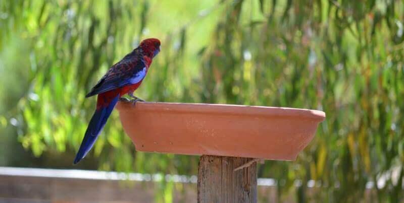 Kangaroo Island Wildlife Sanctuary birdlife