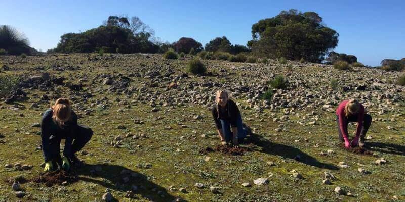 Kangaroo Island Wildlife Sanctuary bomen planten