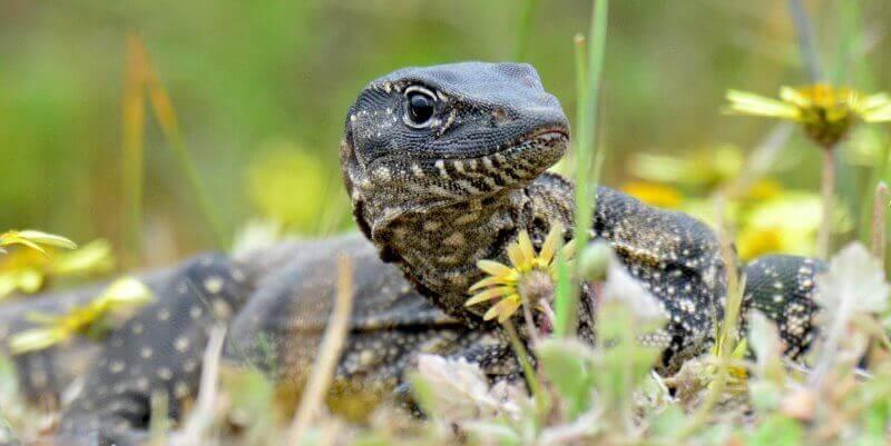 Kangaroo Island Wildlife Sanctuary slang
