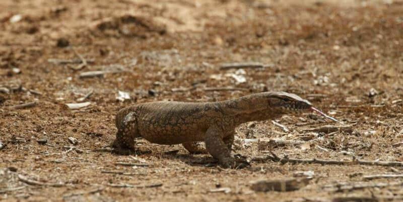 Kangaroo Island Wildlife Sanctuary varaan