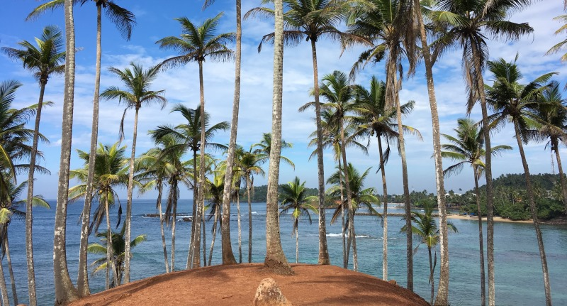 Rutger I Mirissa, palmtrees 6