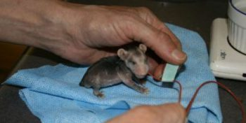 Canada Wildlife Rehab Ontario baby