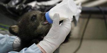 Canada Wildlife Rehab Ontario beertje