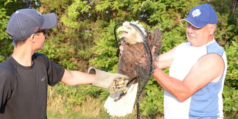 Canada Wildlife Rehab Ontario roofvogel