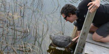 Canada Wildlife Rehab Ontario vrijlaten schildpad