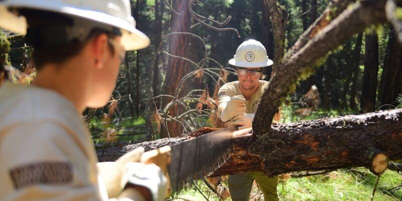 Natuurproject in de VS forest