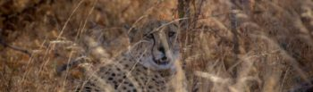 Fotografieproject app van Annelinde Cheetah
