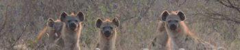 Koen in Swaziland wilde honden