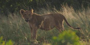 Kruger to Coast Koen in KP leeuwin