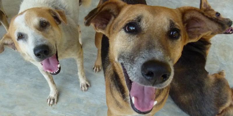 Sri Lanka Dog Care Project 10