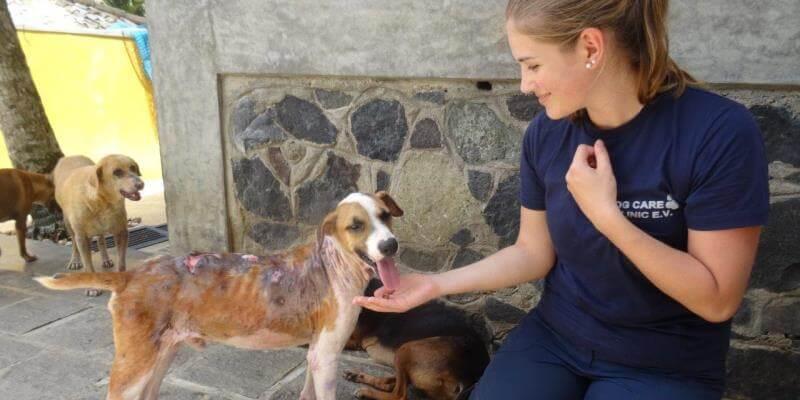 Sri Lanka Dog Care Project 4