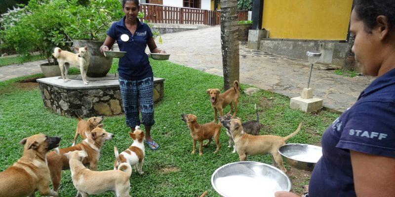 Sri Lanka Dog Care Project 6