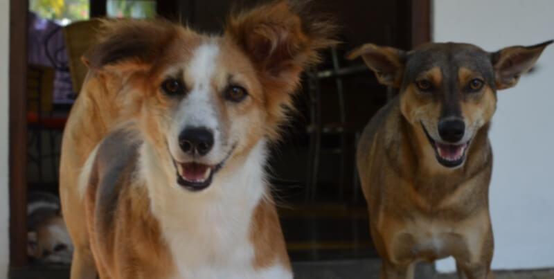 Sri Lanka Dog Care Project 8