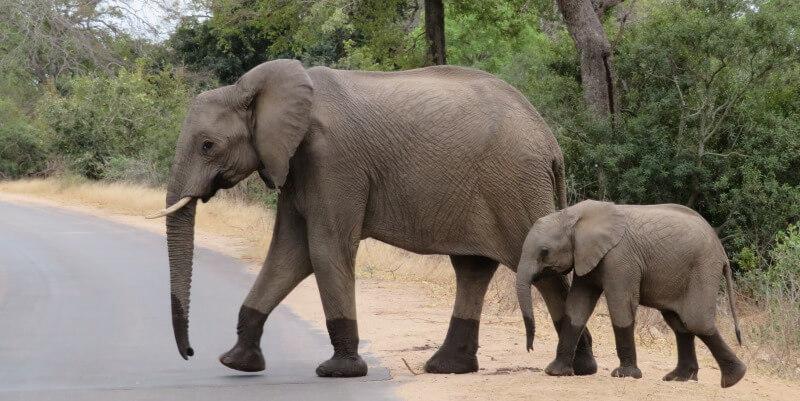 Kruger to Cape week 1 Krugerpark olifanten