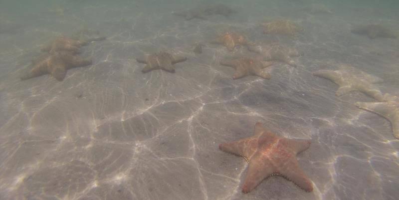 Kruger to Cape week 4 zeesterren in Mozambique