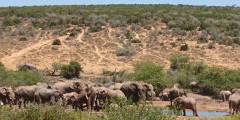 Kruger to Cape week 8 Garden Route olifanten
