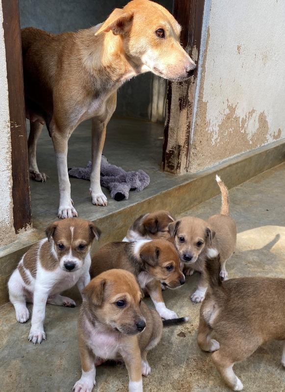 Dog Care Sri Lanka hond met puppies