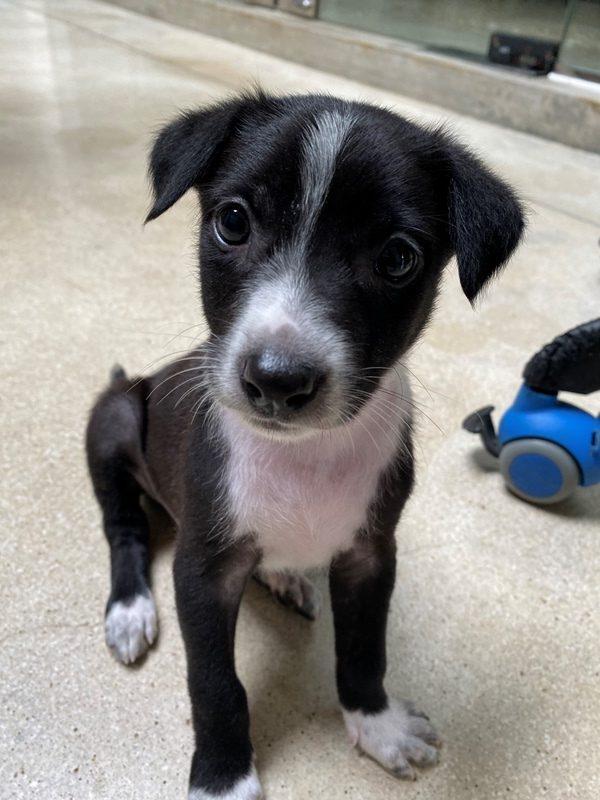Dog Care Sri Lanka puppy