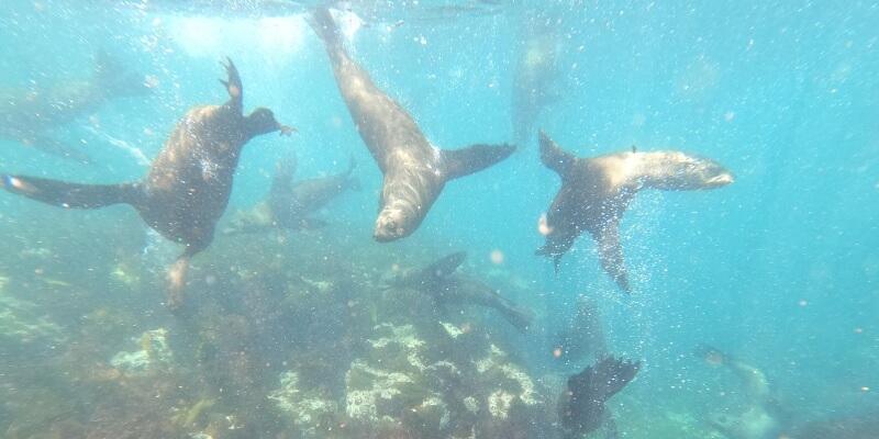 3 weken Kaapstad zeehonden